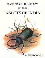 Natural History of Indian Insects