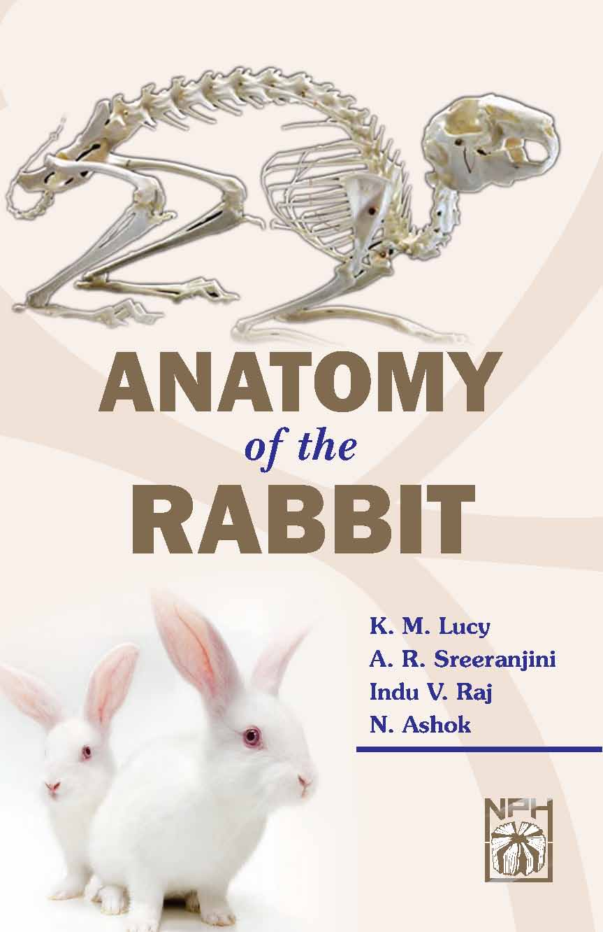 Anatomy of the Rabbit